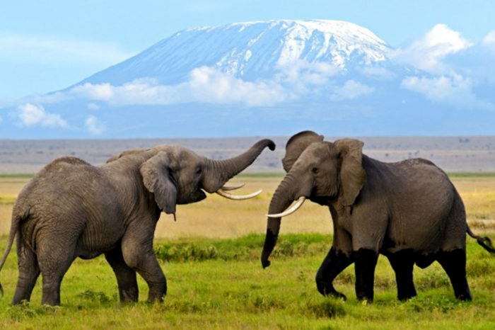 Amboseli Lake Naivasha and Mara 6 Days