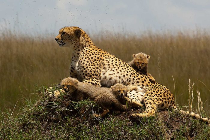 Awesome Kenya 5 Days Safari