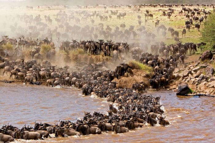 Witness Wildebeest Migration Kenya